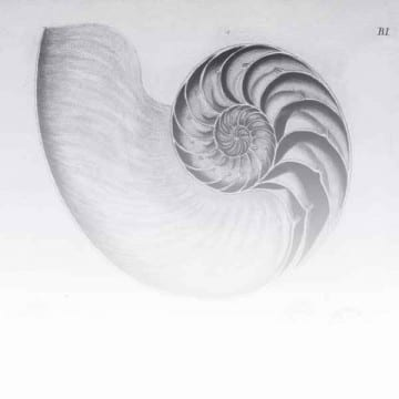 Shells / Fish / Sealife