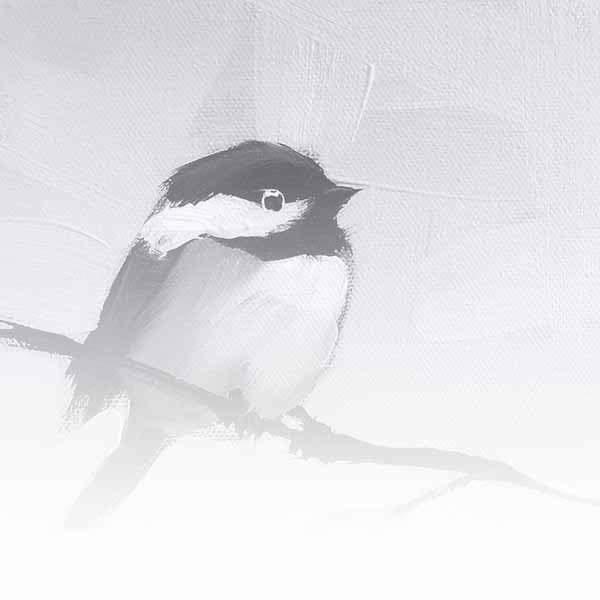 Birds / Bees / Bugs