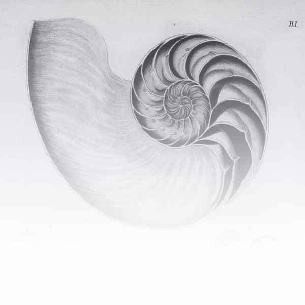 Shells / Fish